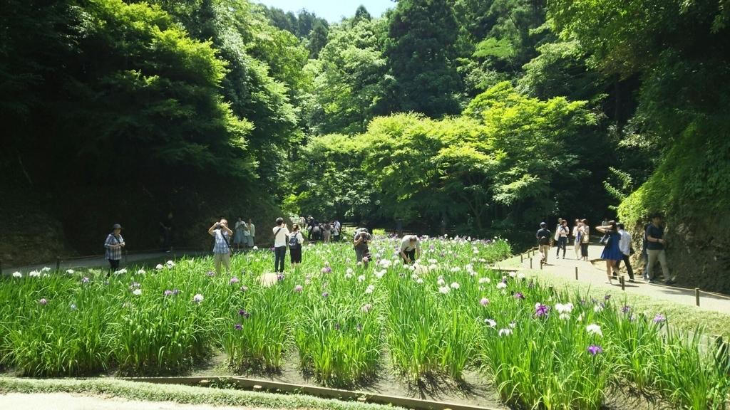 本堂後庭園の花菖蒲