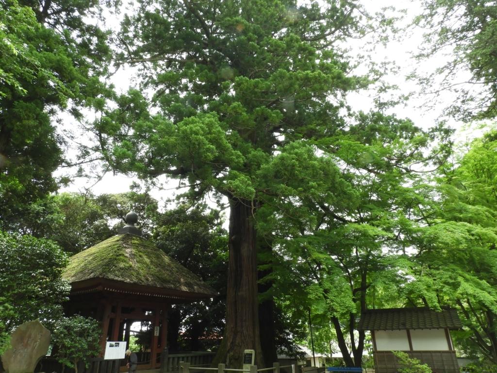 梵鐘の隣に生える二本杉