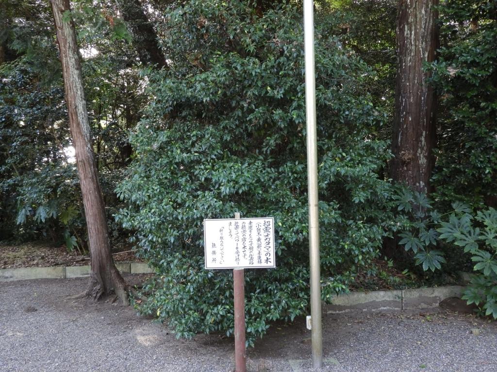招霊(オガタマ)の木