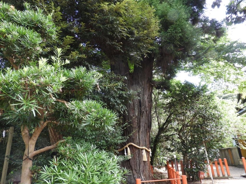 御神木の夫婦杉