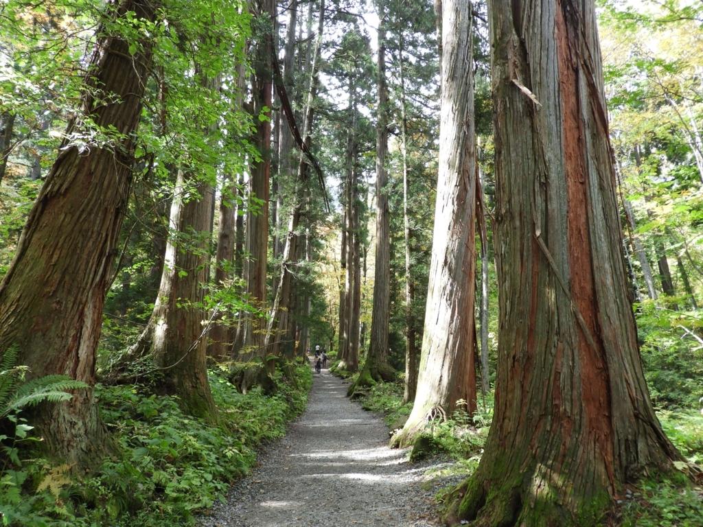 奥社参道の杉並木