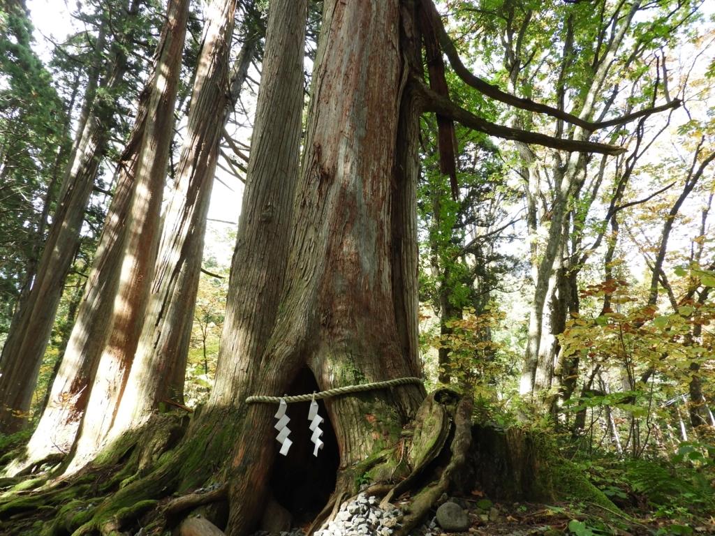 CMで吉永小百合が中に入った杉の洞