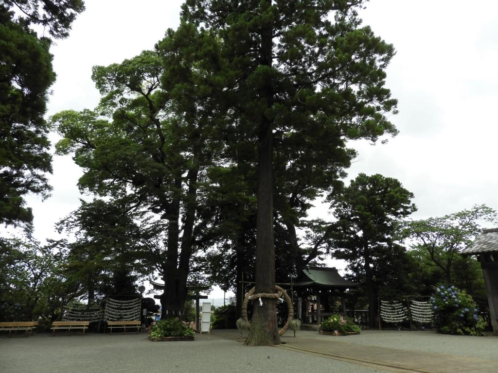 比々多神社の御神木