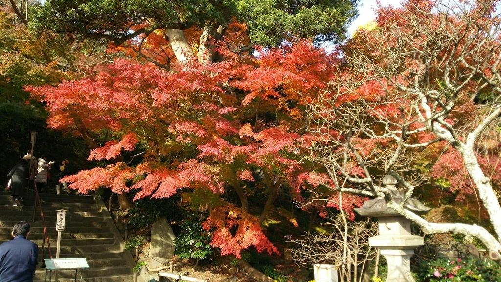 石畳参道の階段上の紅葉