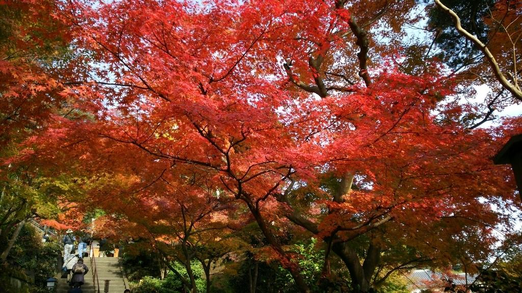 石畳参道の中ごろにある紅葉