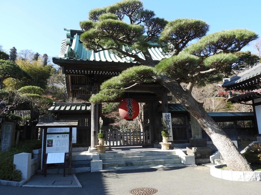 大きな提灯が下がり、「門かぶりの松」が前にある山門