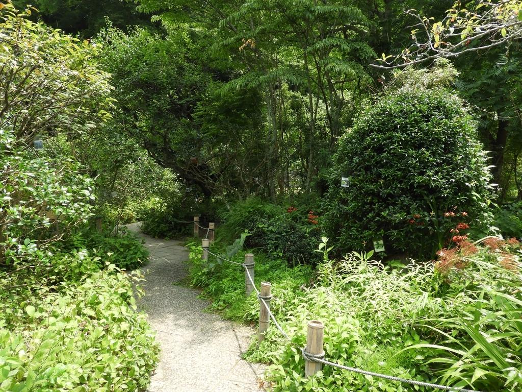 境内の植物