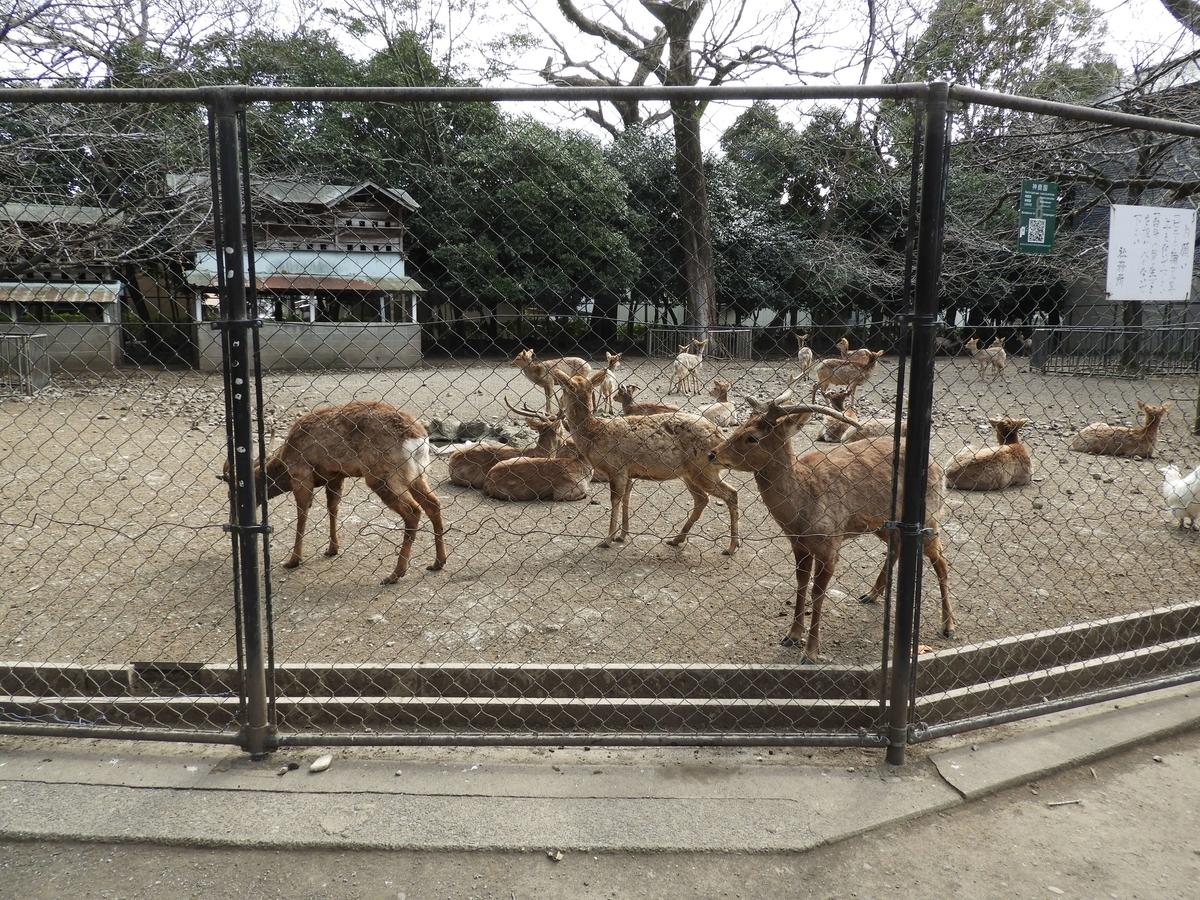 鹿が飼われている神鹿殿