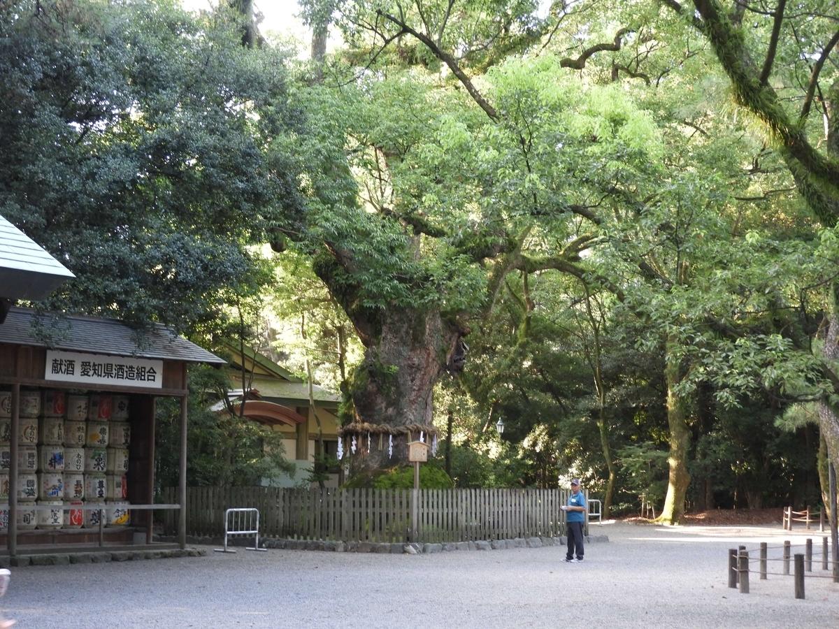 御神木の大楠