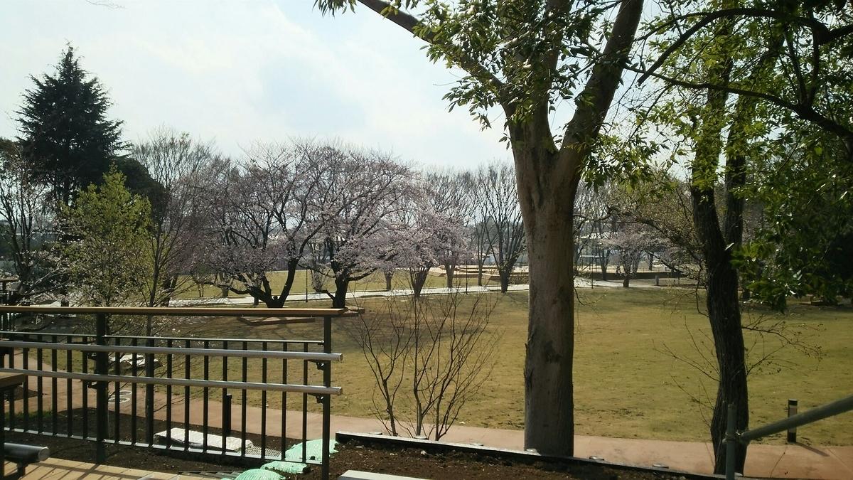 桜が満開の鶴間公園