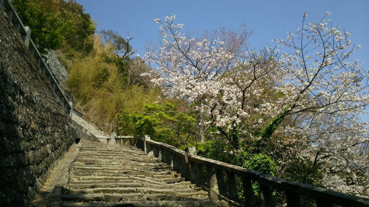 階段の途中にあった見頃の桜