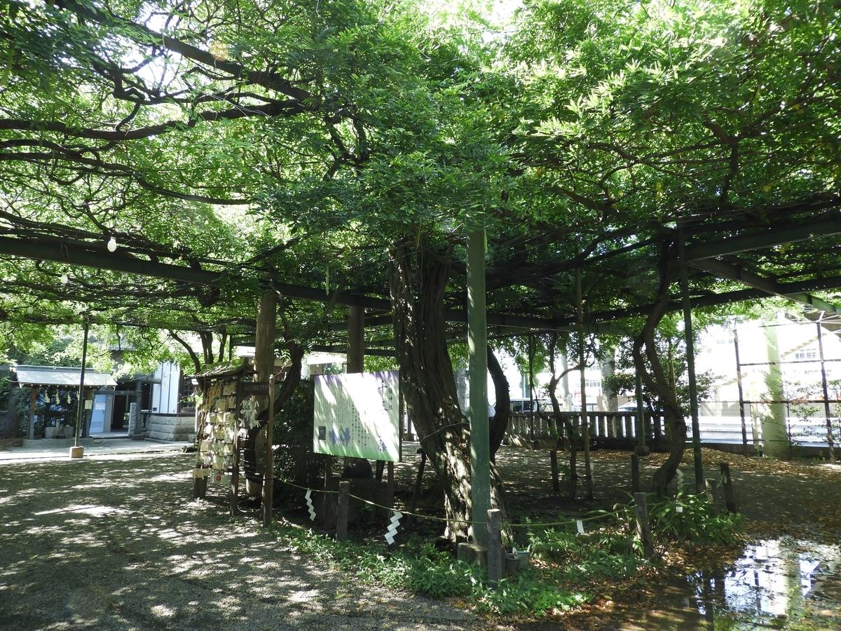 大きな藤棚が組まれた「千年の藤」と呼ばれる御神木