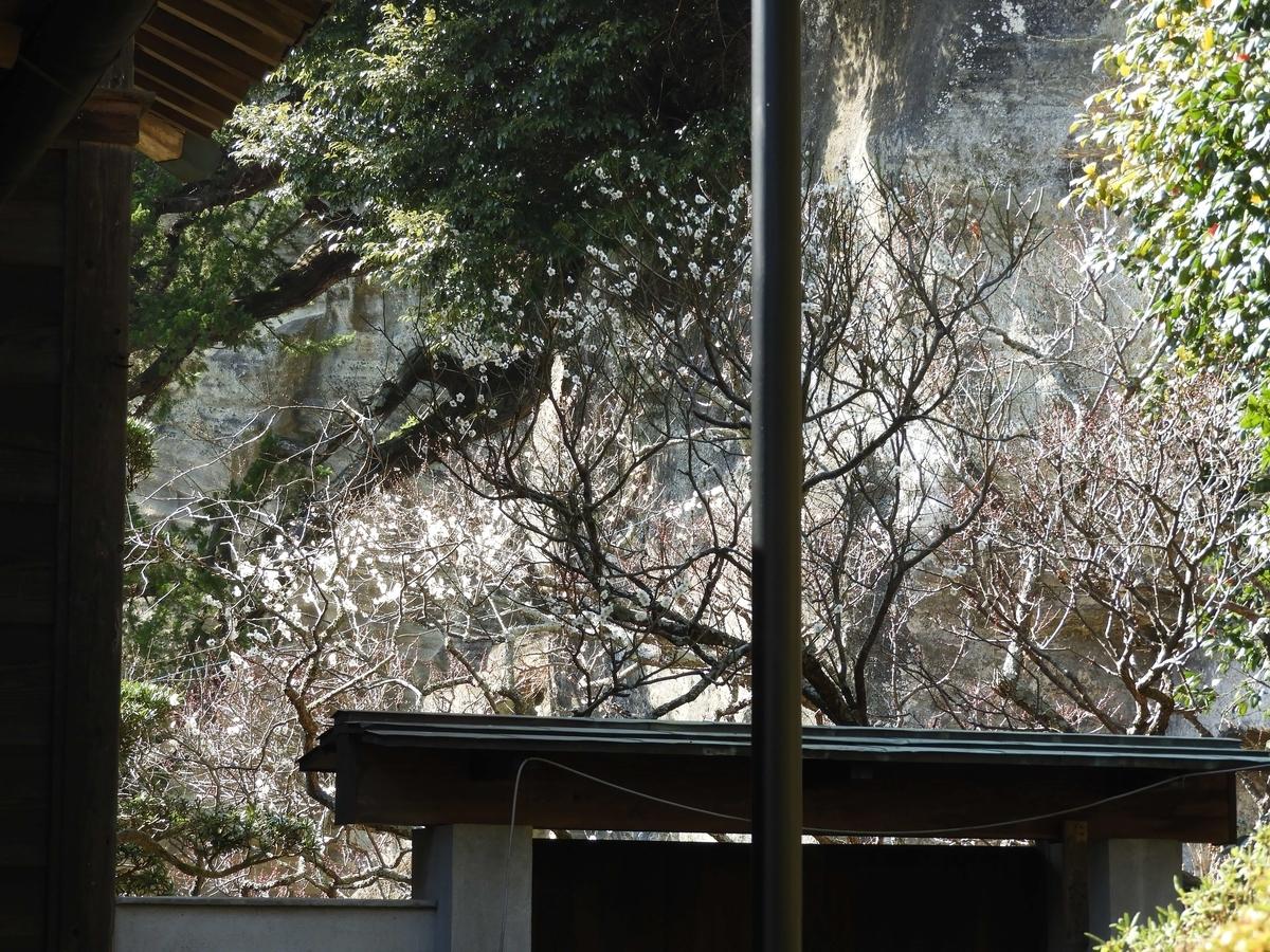 浄光明寺の裏庭
