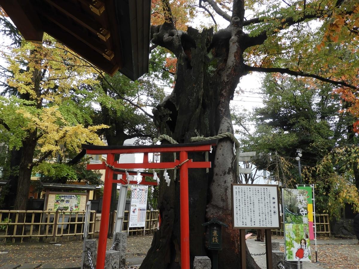 御神木の欅
