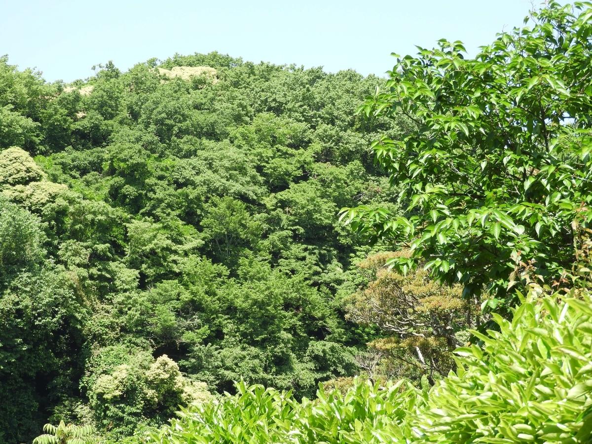 反対側の山
