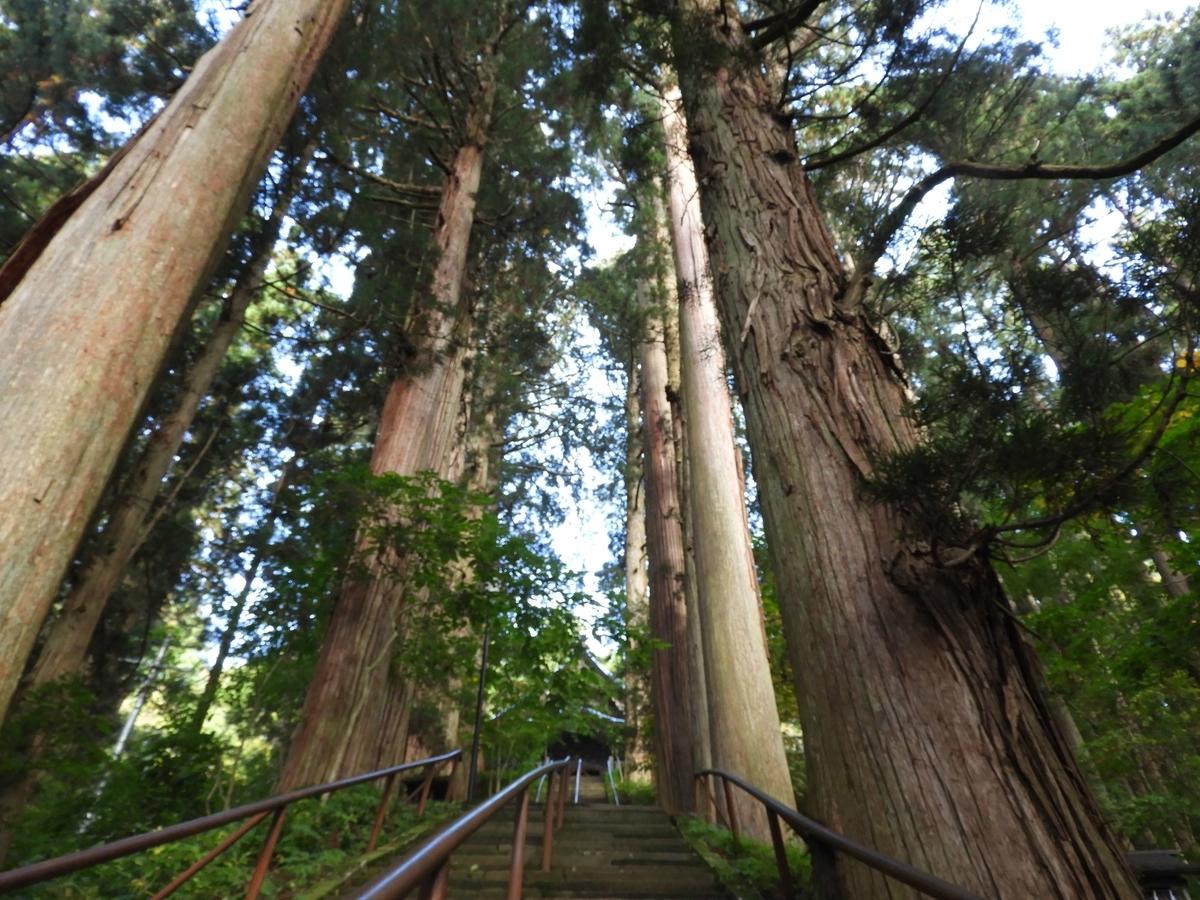 うっそうとした杉木立