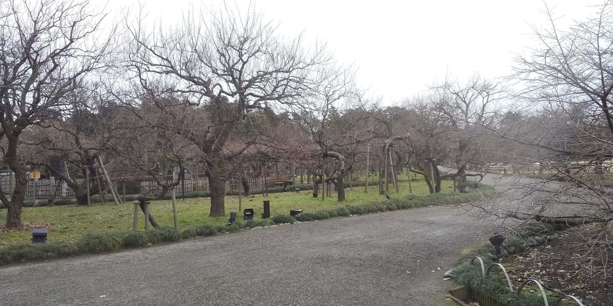 三千本の梅