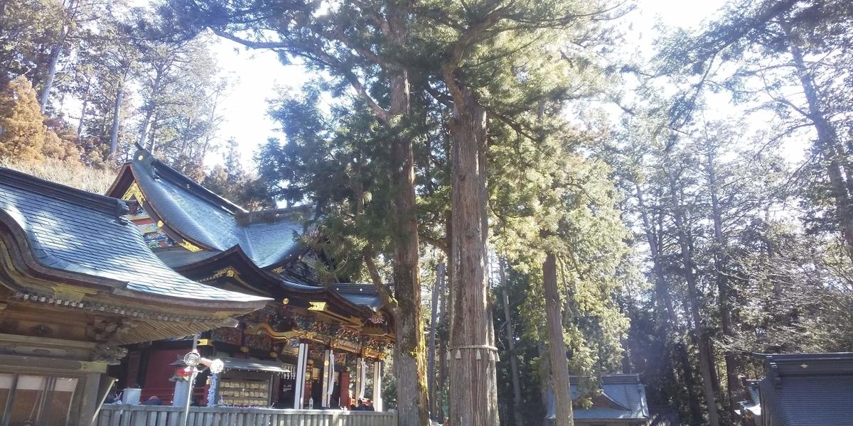 石段両脇にある巨大な杉の御神木