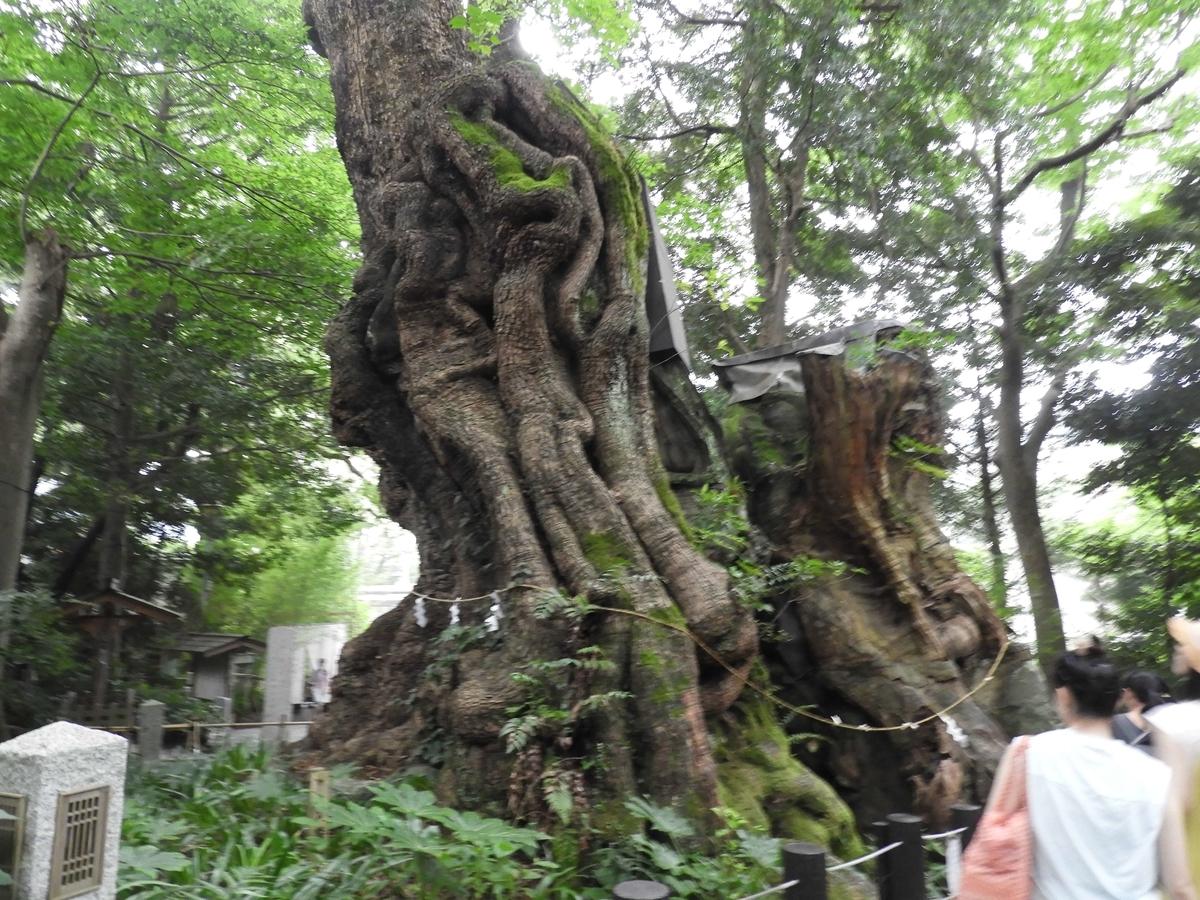 天然記念物の大楠