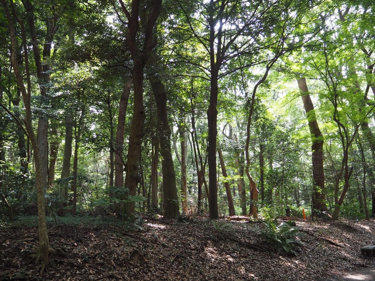 森に戻した参道の落ち葉