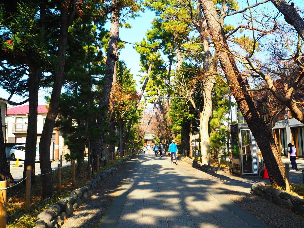 九品仏浄真寺の参道の両側に植えられている松