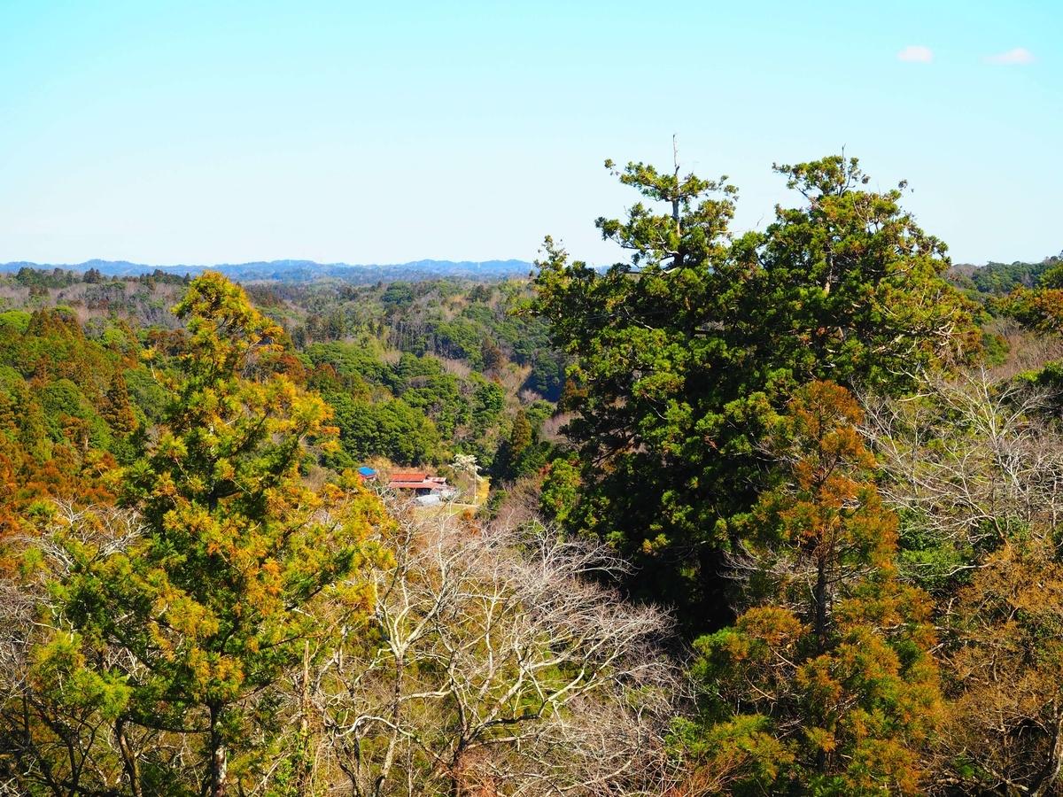国の天然記念物である笠森観音周辺の自然林