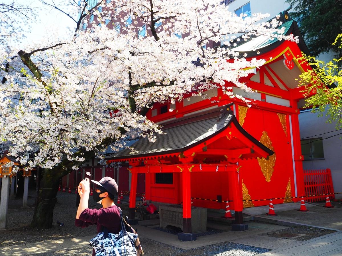 満開の桜に隣接した山車庫