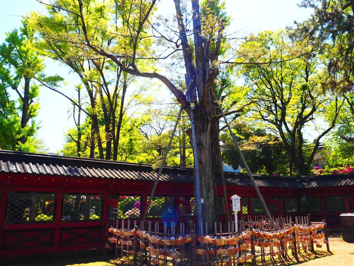 御神木の「願掛けカヤの木」。周囲に多くの絵馬がかけられている