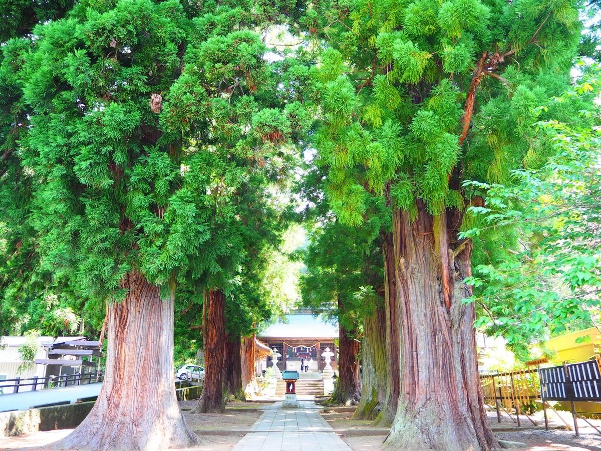 表参道の杉並木
