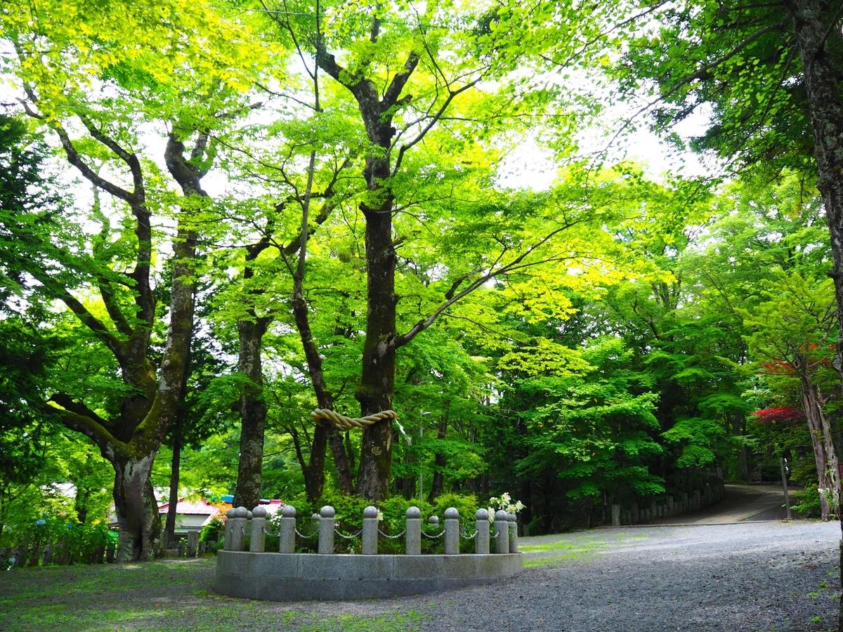 山中諏訪神社の御神木