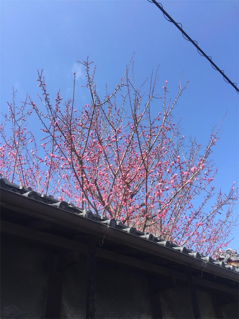 f:id:minamimoto0613:20180306073551j:image