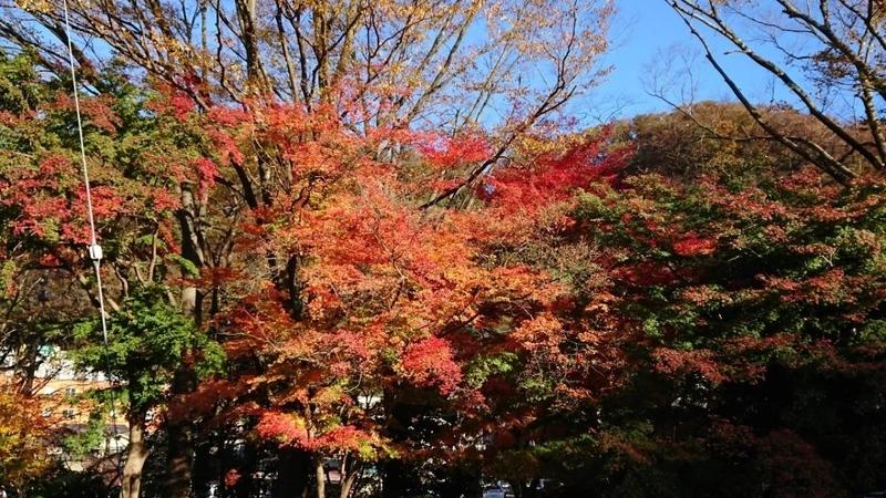 f:id:minamiyoshida:20210111132207j:plain