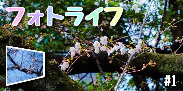 f:id:minaraipapa:20170402175532j:plain