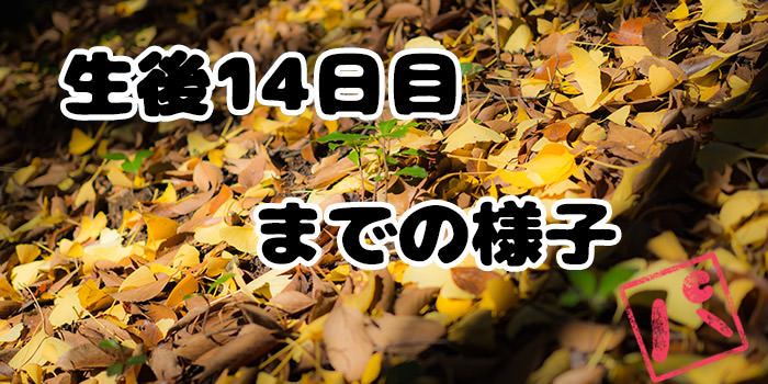 f:id:minaraipapa:20171209091001j:plain