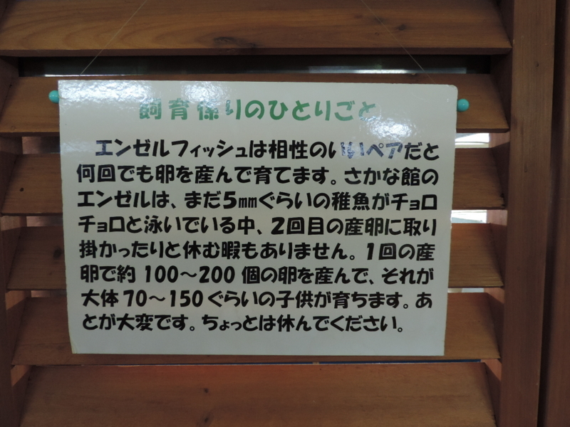 f:id:minato920:20180523204838j:plain