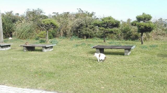 f:id:minatoyokohama303:20161125234201j:image