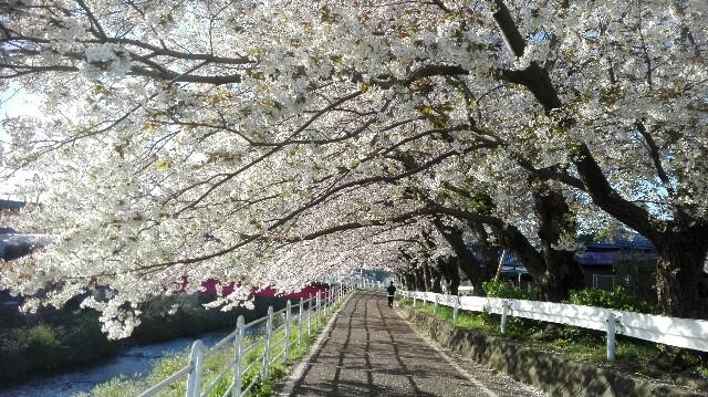 f:id:minatoyokohama303:20170414130921j:image