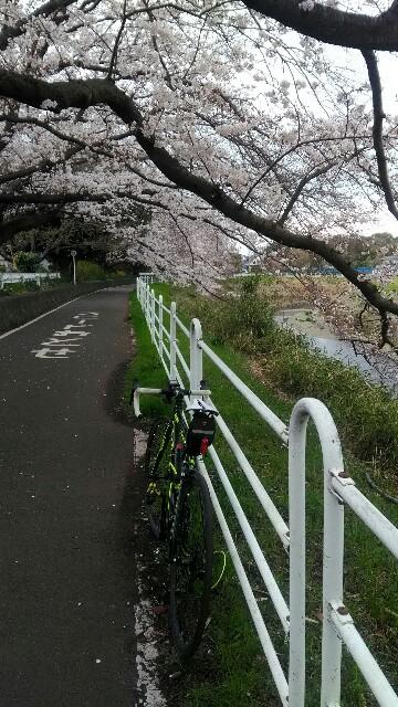 f:id:minatoyokohama303:20190401182514j:image