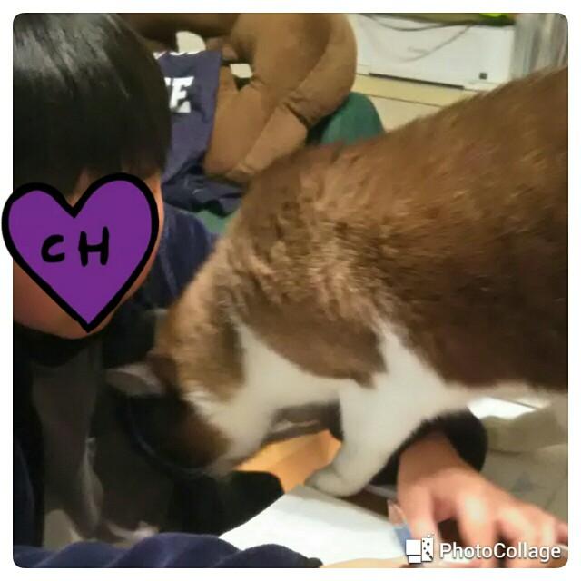 f:id:minatoyokohama303:20200227193021j:image