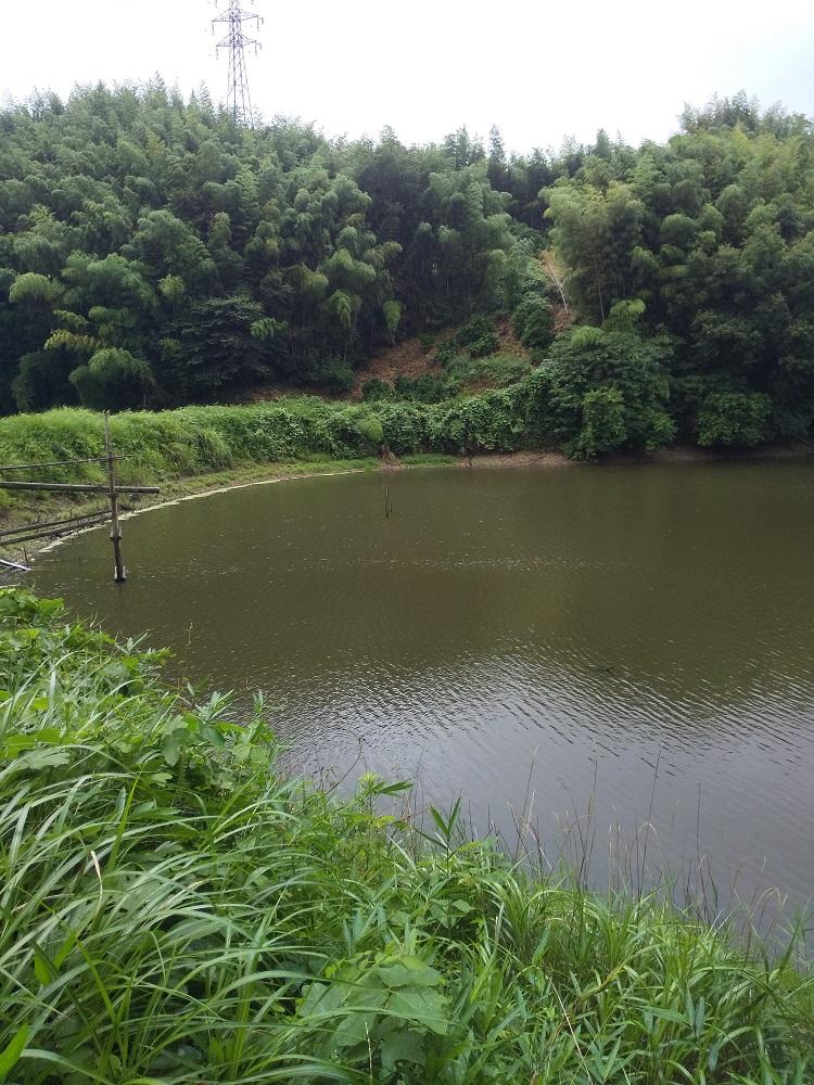 f:id:minekofujiko:20200707183936j:plain