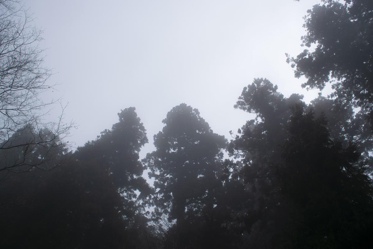 不思議ですけどこの大きな木に見られてるような感覚がありました。