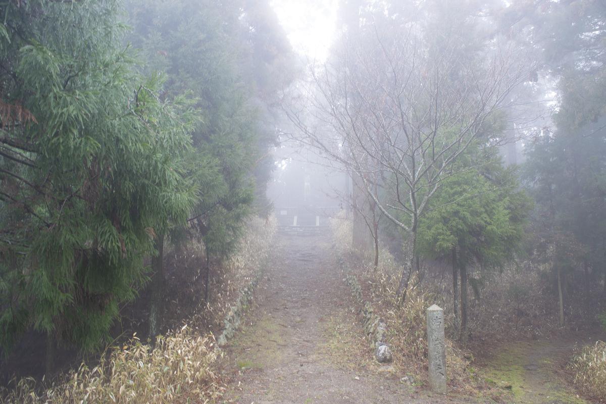 霧深くとも清々しい森