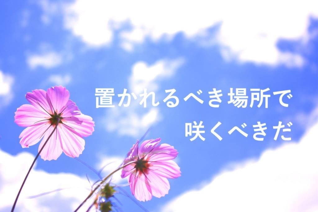 f:id:mineohiroko:20170311013604j:plain