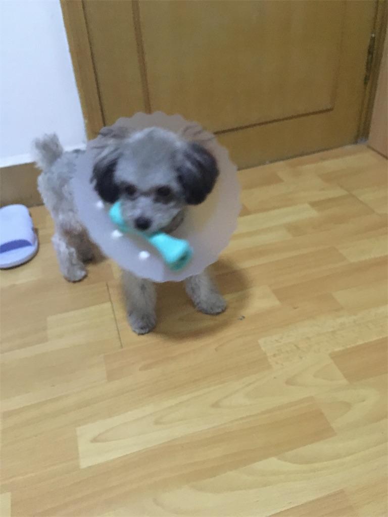 f:id:minghuabj:20180804104041j:image