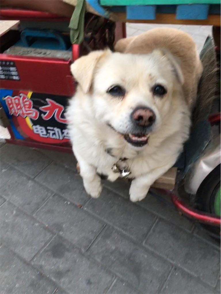 f:id:minghuabj:20181022012109j:image