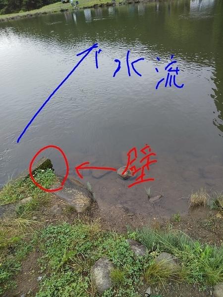 f:id:minipinmamekichi:20200715212635j:plain