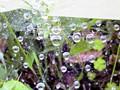 地面に張った蜘蛛の巣に水滴