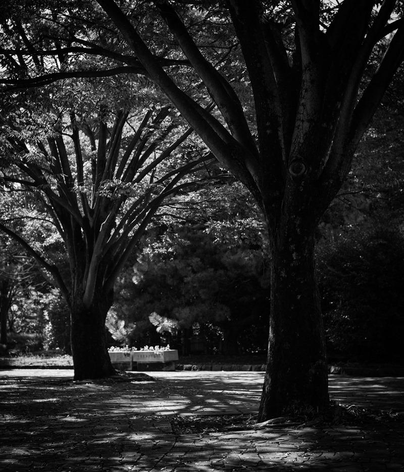 樹木と社風