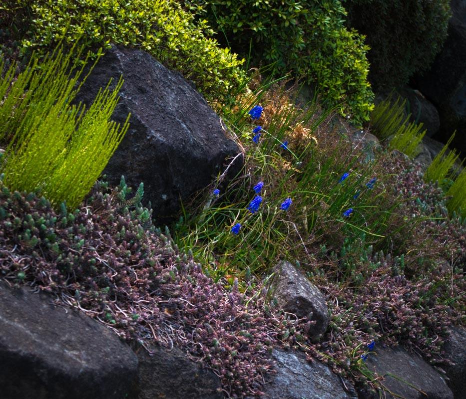長谷寺の早春