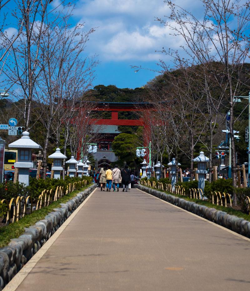 鎌倉の桜と開花状況